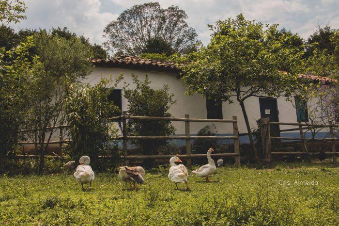 Fim de ano do Qualidade de Vida na Fazenda do Chocolate, em Itu. Inscrições encerradas!