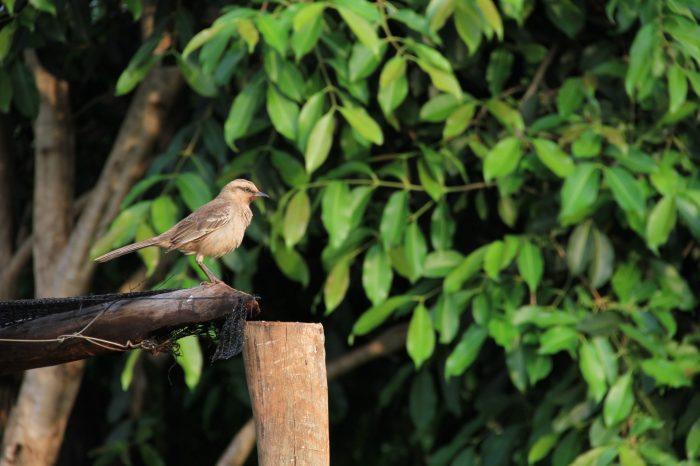 Colônia de Férias e Camping de Barbosa: um oásis de tranquilidade no interior de SP