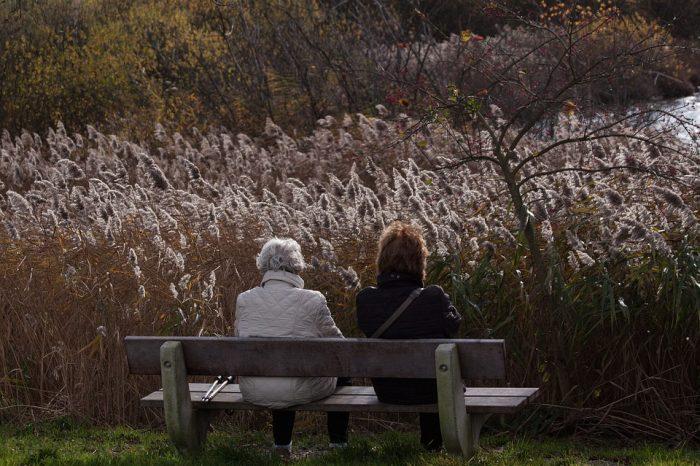 Artigo: Um rendimento mensal para a mãe idosa