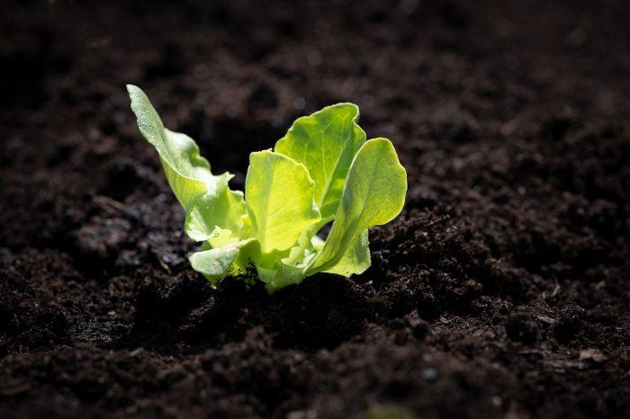 Aproveite o tempo para fazer uma horta mesmo em pequenos espaços